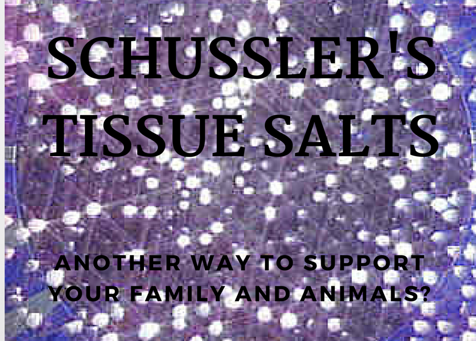 """Introduction to the 12 """"Schussler"""" Tissue Salts"""